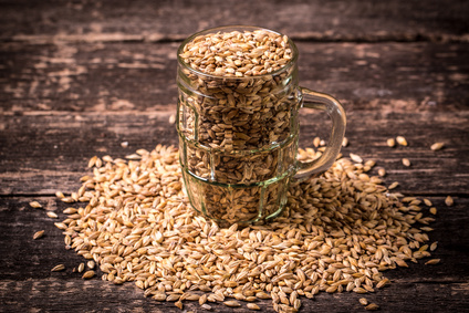 Le Malt : de la céréale à la bière